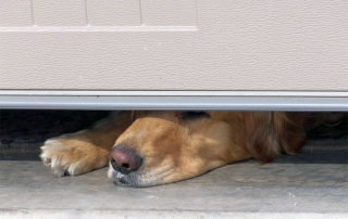 Garage Door Open (Dog's Nose Poking Under Door)